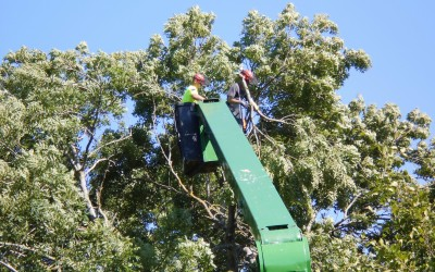 Davis Trees Services Topping
