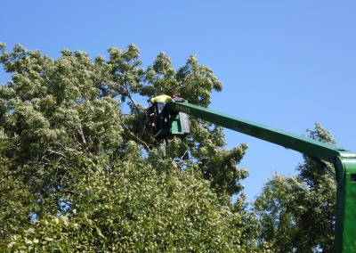 Davis Trees Services Tree Felling